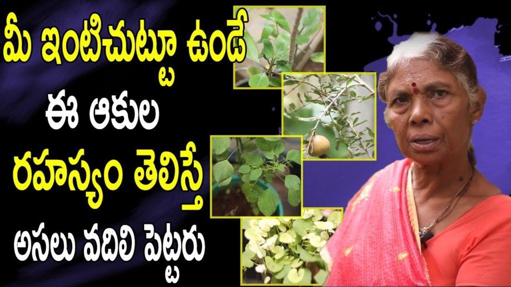 మీ ఇంటిచుట్టూ ఉండే ఈ ఆకుల రహస్యం తెలిస్తే అసలు వదిలి పెట్టరు | Medicinal Plants Health Benefits