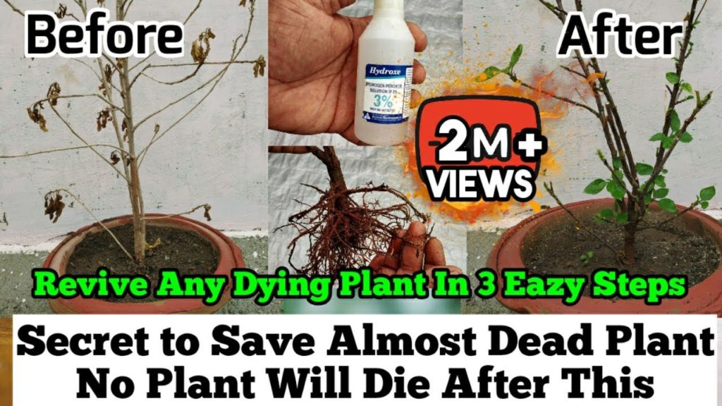 How To Revive Any Dying Plant in 3 Eazy Steps : Root Rot Treatment : Plants Issues And Solutions